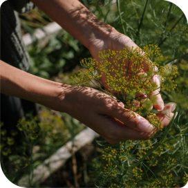Vedic Upchar Herbal Tea - 36 Herbs